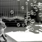 cat bubbles