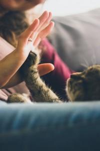 cat communicating