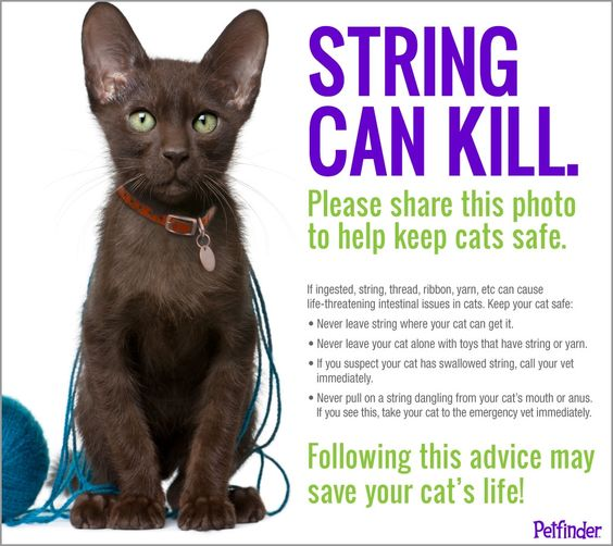 String can kill cats