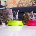 essential products for cats