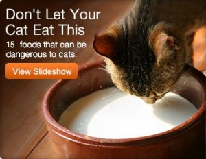 Cat Do Not Eat Foods Image